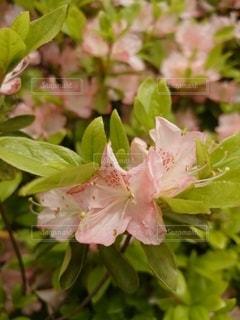 花のクローズアップの写真・画像素材[3230053]