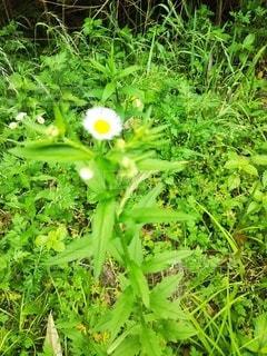 緑豊かな畑のクローズアップの写真・画像素材[3230330]