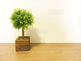 かわいい木が生えているの写真・画像素材[3284208]