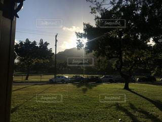芝生で覆われた野原の電柱のクローズアップの写真・画像素材[3230425]