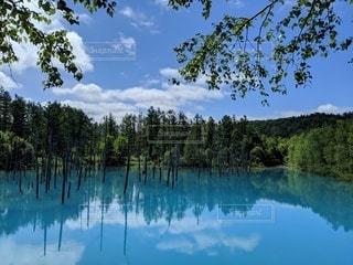 青い池の写真・画像素材[3230527]