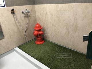 犬用のトイレの写真・画像素材[3231114]