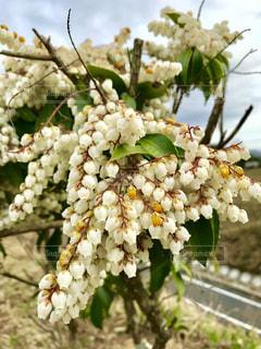 近くの花のアップの写真・画像素材[1068314]