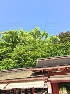 神社の写真・画像素材[132391]