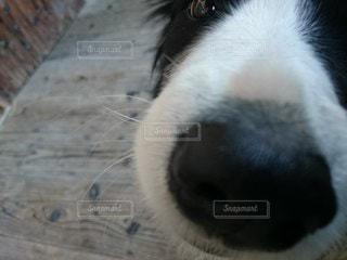 犬のクローズアップの写真・画像素材[3253791]