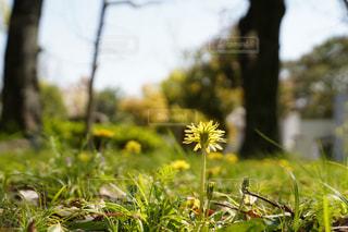 春の息吹の写真・画像素材[3236431]