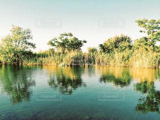 水面の写真・画像素材[3237505]