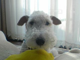 愛犬の写真・画像素材[133385]