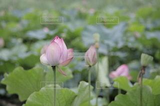 花のクローズアップの写真・画像素材[3494385]