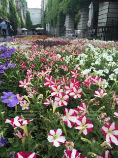 花の写真・画像素材[144500]