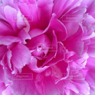 花の写真・画像素材[132932]