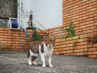 野良猫の写真・画像素材[1000999]