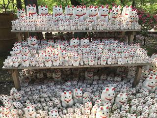 豪徳寺の招き猫の写真・画像素材[1193577]