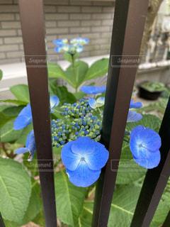 花のクローズアップの写真・画像素材[3293455]