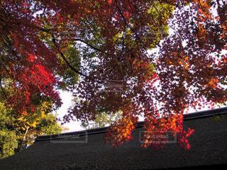 下鴨神社で撮りました。の写真・画像素材[1226699]