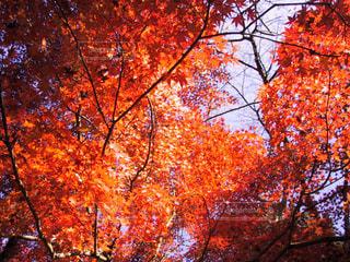 近くの木のアップの写真・画像素材[1226705]