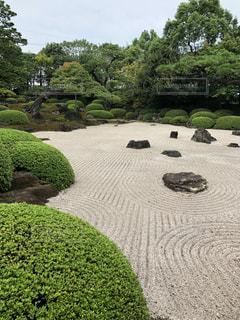 庭の緑の植物の写真・画像素材[3249417]