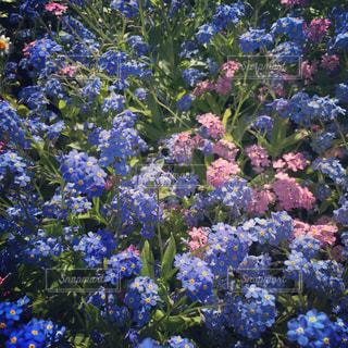 花の写真・画像素材[133365]