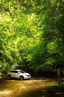 森の中の駐車場の写真・画像素材[3246828]