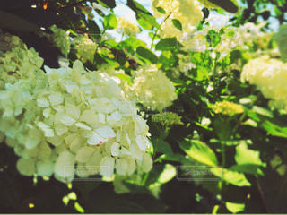 自然の写真・画像素材[133743]