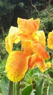 緑の葉の黄色い花の写真・画像素材[3248390]