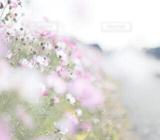 花のクローズアップの写真・画像素材[3879532]