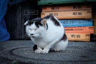 眠ネコ。の写真・画像素材[3686186]