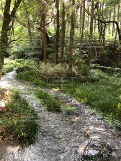 森の中の小川の写真・画像素材[3605313]