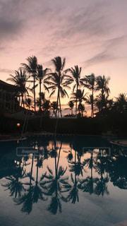 夕焼けの前にヤシの木の写真・画像素材[3253410]
