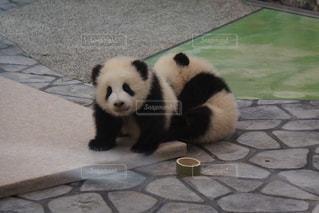 動物の写真・画像素材[133986]