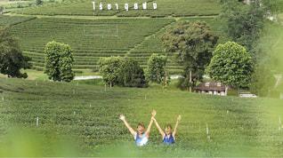 茶畑でバンザイ🙌の写真・画像素材[2382221]
