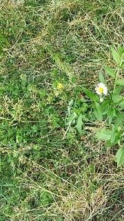 野原の小さな花の写真・画像素材[3273803]