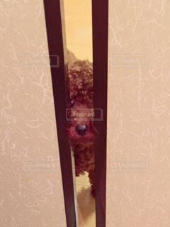 犬の写真・画像素材[134361]