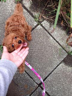 犬の写真・画像素材[134569]