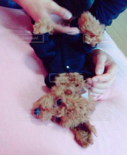 犬 - No.134583