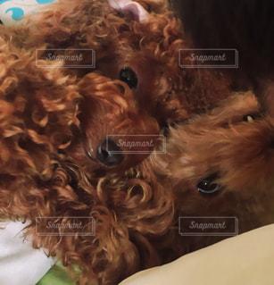犬の写真・画像素材[134601]