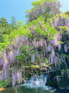 水の体の隣にある木の写真・画像素材[3254271]