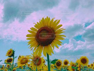 夏の思い出の写真・画像素材[3251697]