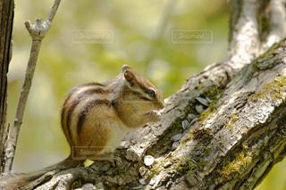 枝の上のリスの写真・画像素材[3272847]