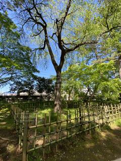 囲われている大きな樹木の写真・画像素材[3255477]