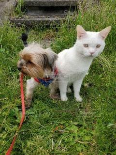 犬&猫仲良しの写真・画像素材[3256957]