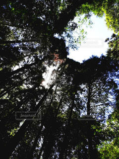 森林浴の写真・画像素材[3306850]