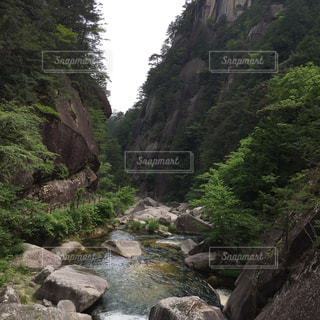 自然の写真・画像素材[135242]