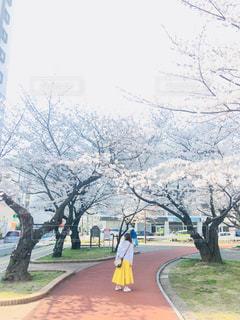 桜と黄色のスカートの写真・画像素材[1103806]