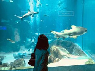 水槽の魚たちの写真・画像素材[1150463]