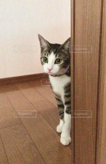 見つめる猫の写真・画像素材[3258004]