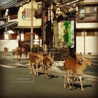 鹿の散歩の写真・画像素材[3257752]