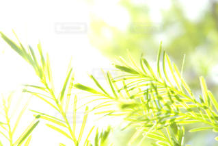 木の写真・画像素材[505867]