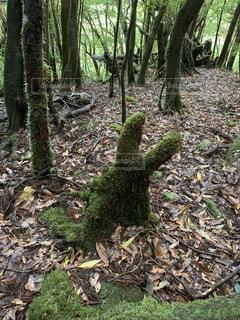 小トトロの苔の写真・画像素材[3258320]