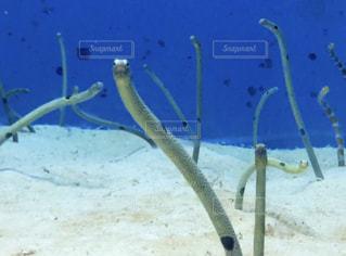 水の中の魚のグループの写真・画像素材[3260403]